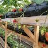 Теплицы по выращиванию клубники