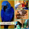 Био корма премиум класса для крупных видов попугаев из европы